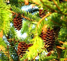 Three Pinecones - My Place by Deb Fedeler