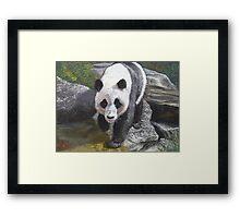 Approaching panda Framed Print