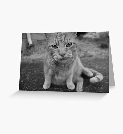 El Gato 2 Greeting Card