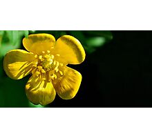 buttercup... Photographic Print