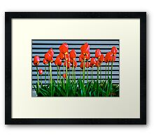 Red tulips and metal ! Framed Print