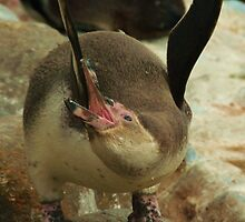 Penguin Stretch! by MichelleRees