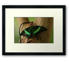 A Blink of Emerald Framed Print