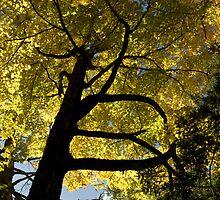 Spider Tree by litmusound
