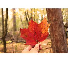 All Fallen Leaves Photographic Print