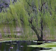 Weeping Willow and the Geese by Paulette1021