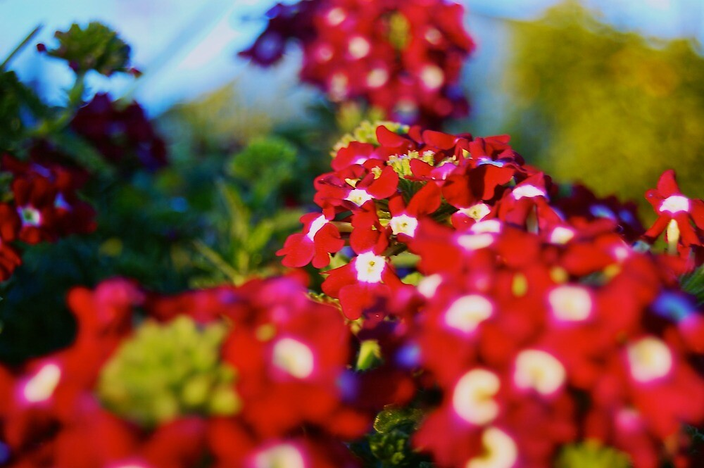 Red Flower Patch  by kyleO