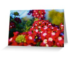 Red Flower Patch  Greeting Card