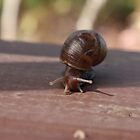 African Snail by Yacoub Hilweh