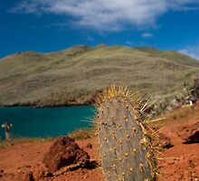 Cacti Island by MichaelJP
