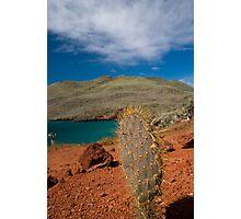 Cacti Island Photographic Print