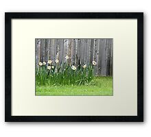 Doffodils along the Fence Framed Print