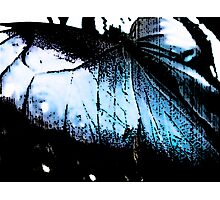 Luminescent Wings Photographic Print
