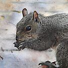 Love Them Nuts by Pat Moore