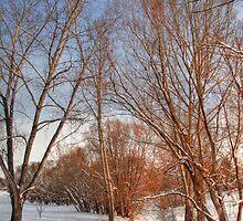 Frozen creek by zumi