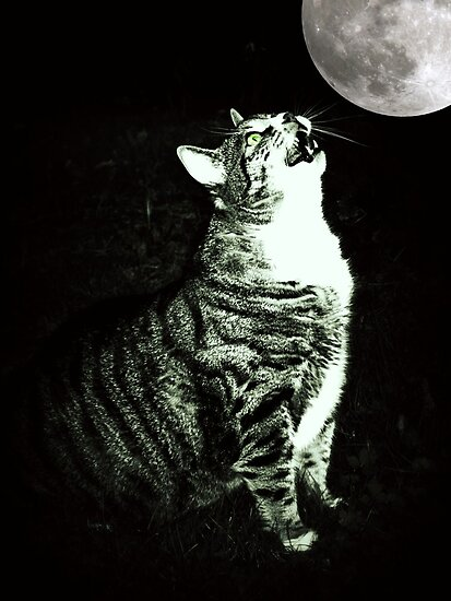 nyan cat roblox id
