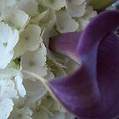 Purple Paradise by nancy dixon