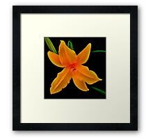 Vibrant- A Beautiful Floral Print Framed Print