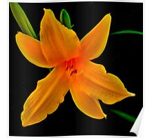 Vibrant- A Beautiful Floral Print Poster