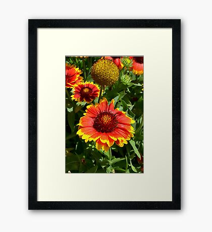 Sunbursts- Colorful Arrangement Framed Print