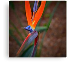 Exotic Flower- Bird of Paradise Canvas Print