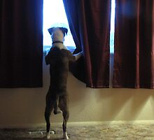 Buster Waits For Dad by trueblvr