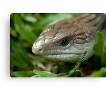 The Blue Tongue Canvas Print