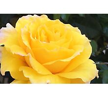 My Yellow Rose Photographic Print