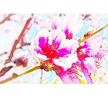 Chalk Blossoms Photographic Print