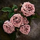 Vintage Rose by Diana Graves Photography