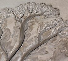 patterns on the mud flats by robinmaher