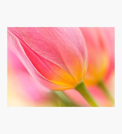 Pastel Colors Photographic Print