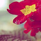 Spring by jussta
