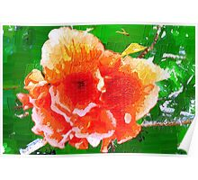 Splendid hibiscus Poster