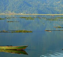 Fisherman On Lake Phewa, Pokhara, Nepal by Breanna Stewart