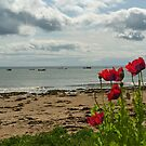 Poppies by the Sea by Kat Simmons