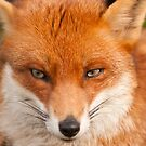 Foxy by Tony Hadfield