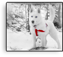I don't care if someone is stuck again, I'm still not Lassie. Canvas Print
