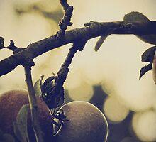 Apples by Nikki Smith