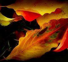 Echoes of November by Nadya Johnson