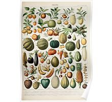 Adolphe Millot fruits B Poster