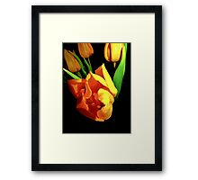 Tulips steal the winter Framed Print