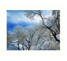 Frozen Trees (Ice Fog) Art Print