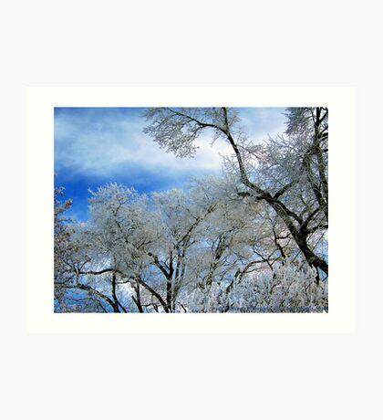 Frozen Trees (Ice Fog) Art Print