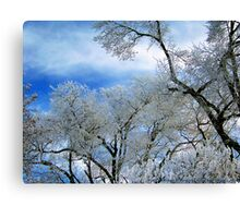 Frozen Trees (Ice Fog) Canvas Print