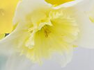 Soft and Pure by NatureGreeting Cards ©ccwri
