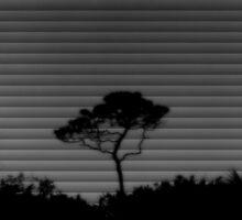 Through the shades..... by DaveHrusecky
