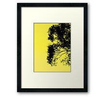 Morning Side Trees Framed Print