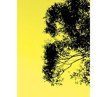 Morning Side Trees Photographic Print