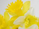 Spring Song by NatureGreeting Cards ©ccwri